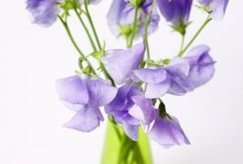 Sweet peas are charming in loose arrangements.