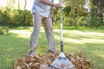 Rather than sending bags of leaves out with the garbage, you can reuse the leaves as mulch around plants.