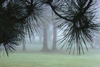 Foggy weather isn't the best choice for Roundup, but it should still work.