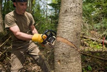 Lumberjacks often use chainsaws to fell trees.