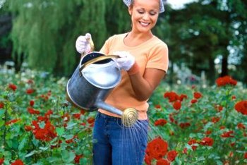 Apply liquid fertilizer with a watering can or mister.