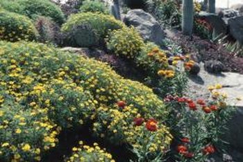 Berms can be used in any type landscape.