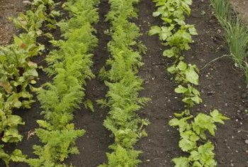 Weed control improves the health of the vegetables.