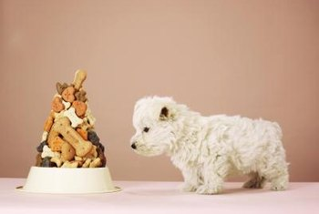Where to start? Your doggie bakery should provide many healthy food choices for dogs and their owners.