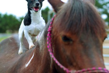 Creeping Charlie will not hurt your dog, but it may seriously harm your horse.