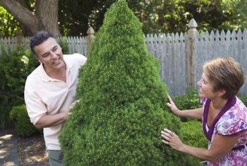 A topiary tree provides a focal point in your garden.