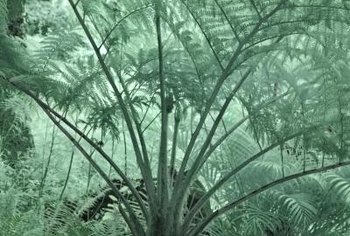 Cycads look like palms but are only distantly related.