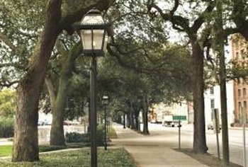Create enough space under trees for walking.
