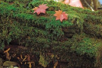 Moss tends to grow in wet, shady areas.