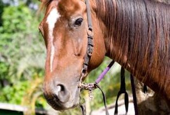 Leather reins need proper care to live out their potential.