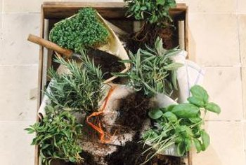 Planting herbs in fall promotes hardier roots for stronger spring growth.