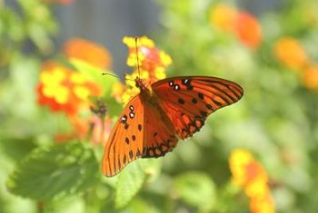 Butterflies are often attracted to orange or yellow flowers.