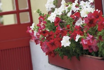 Insert plastic pots filled with seasonal flowers into painted flower boxes.