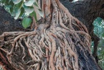 Deep vertical roots give several types of plants a unique durability.