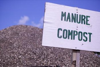 Composted manure is further broken down and is easily incorporated into the soil.