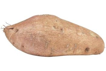Ornamental sweet potato produces edible tubers.