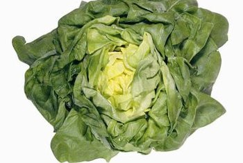 """Bibb"" lettuce is known for its dark outer leaves, light yellow center and sweet flavor."