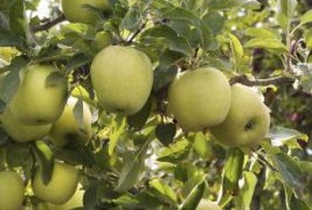 Dormant oil may be one of the most important, yet least toxic sprays for apple trees.