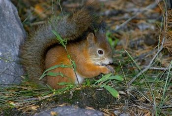 Squirrels can quickly uproot all the plants in a flower box.