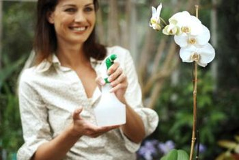 Control gnats on orchids with smart cultural practices.