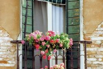 Geraniums add bright color to containers and window box planters.