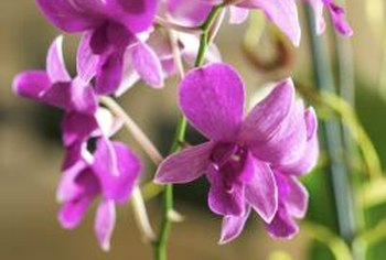 Some types of mold can severely damage orchids.