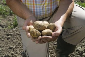 It isn't possible to visually distinguish between organic and regular seed potatoes.