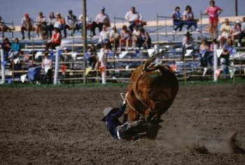 Rodeo bullfighters spring into action when riders are thrown on the ground.