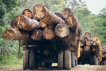 Logging, legal and illegal, is destroying tropical forests on Borneo.