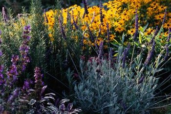 Don't be afraid to experiment with perennial combinations.