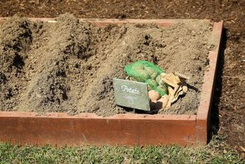 "Raised beds allow you to plant a ""no-dig"" garden."