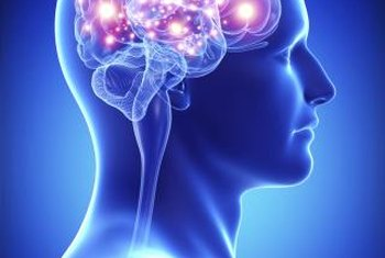 Cognitive neuroscientists endeavor to understand the mind-brain connection.