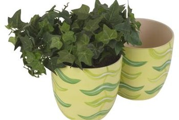 Keep vining houseplants looking good with pruning.