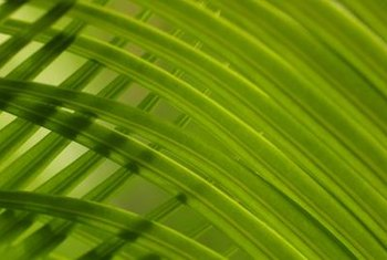 If a frond is still green, leave it on the tree.