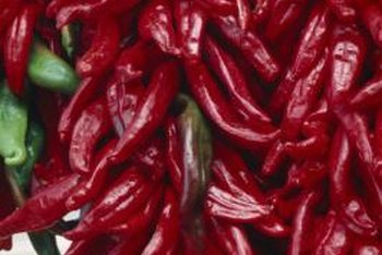 Grow tabasco plants for a year-round supply of peppers.