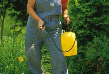 An insecticide is one type of pesticide, used to control insect pests.