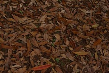 Decaying leaves release tannic acid into the soil.