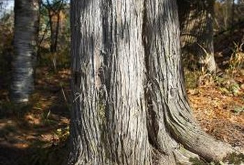 Tree roots need space directly below the canopy to search for moisture and nutrients.