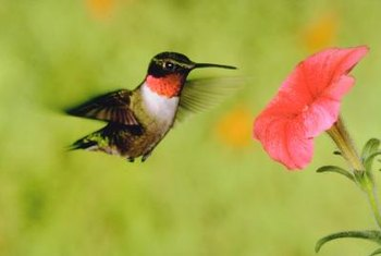 Birds rely on plants like vines for the nectar, seeds and berries they produce.