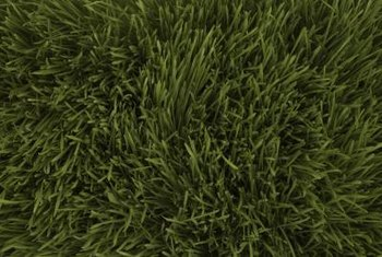 Kill grass cheaply by covering it up.