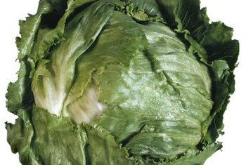 Loose outer leaves protect the dense iceberg lettuce head.