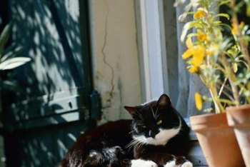 Keep cats out of your potted plants for good.