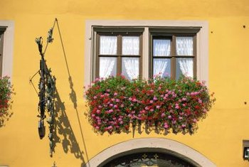 For year-round blooms, you may need to rotate your window box plants every couple of months.