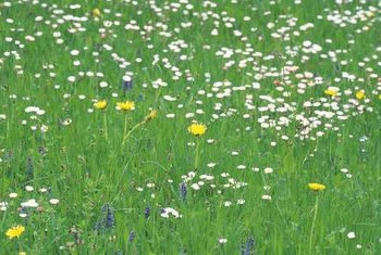 A meadow lawn provides a home for beneficial creatures.