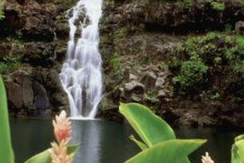 Plants help to create a lush getaway near streams and waterfalls.