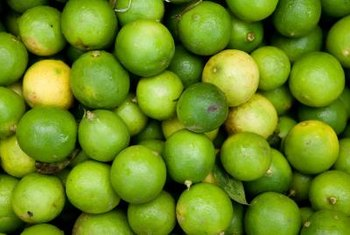 Key limes are picked green, before they turn yellow.