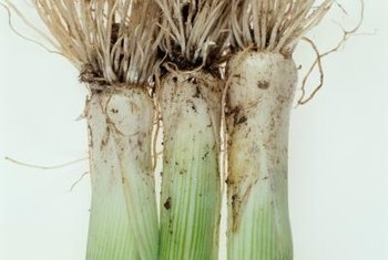 Leeks resemble large green onions.