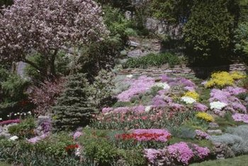 Perennial rock garden flowers add color and fragrance to the garden.