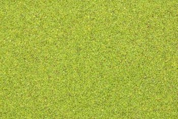 Duckweed can grow in any still or slow-moving body of water.