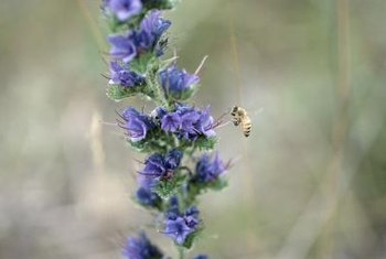 Protect bees by spraying when plants are not blooming.